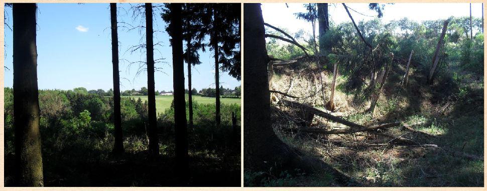 Germeter Treeline and CP