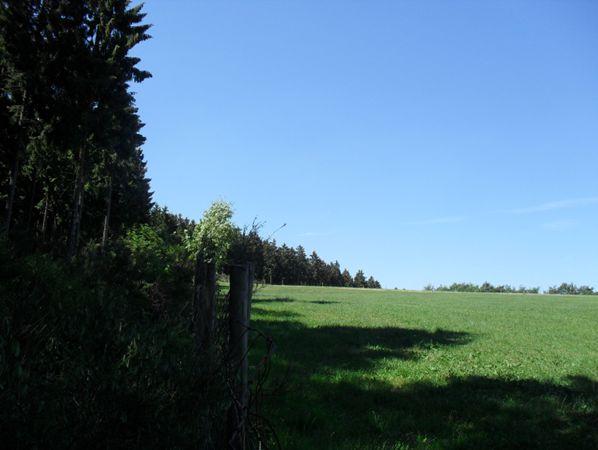 Germeter treeline west