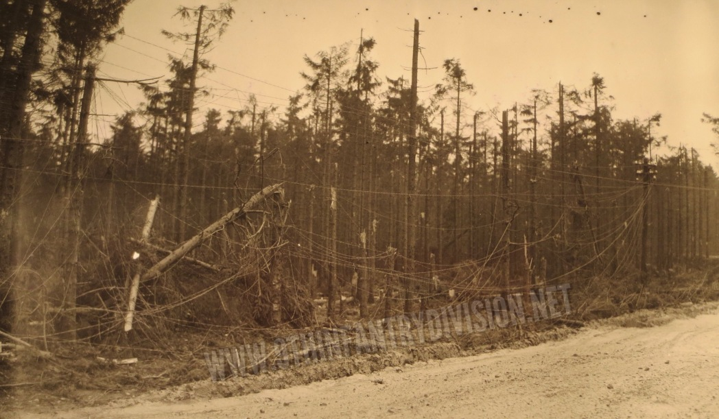 Battle damaged trees on 6 December 1944.